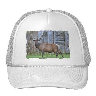 6 Point Bull Elk Photo Trucker Hat