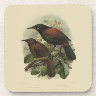 6 Vintage Science NZ Birds - Saddleback Drink Coaster