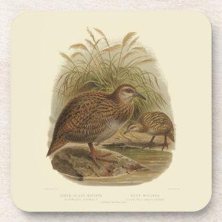 6 Vintage Science NZ Birds -  Weka Coasters
