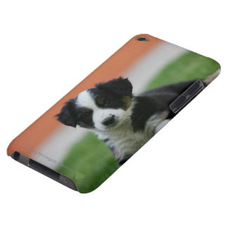6 Week Old Border Collie iPod Case-Mate Case