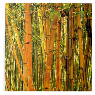 6 X 6 Bamboo Ceramic Art Tile