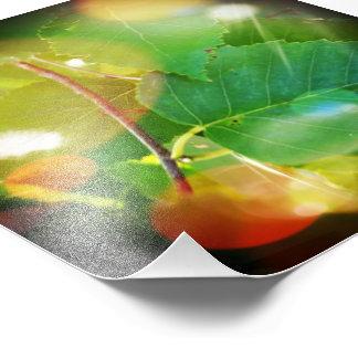 "6"" x 6"", hojas místicas en Boothbay Maine (satén) Cojinete"