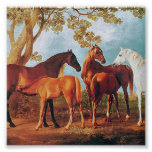 6a   Mares and Foals Print