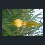 "6x4 Photo Print<br><div class=""desc"">A lovely lady&#39;s slipper graces this 6x4 Photo Print.  The lady&#39;s slipper is a rare orchid found in Manitoba.</div>"