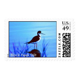71590016, Black Neck Stilt Stamp