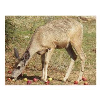 7/27/13 Deer In Glen Ilah, Arizona Postcard