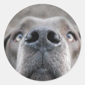 7.6 cm sticker Doggennase