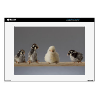 7 Baby Pet Chickens on a Perch Decals For Laptops