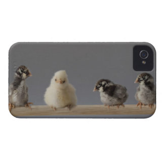 7 Baby Pet Chickens on a Perch iPhone 4 Case