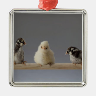 7 Baby Pet Chickens on a Perch Metal Ornament
