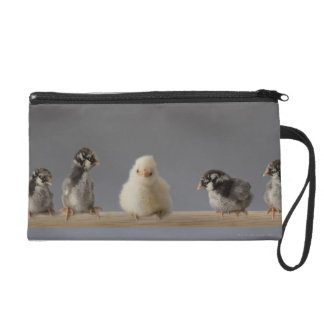 7 Baby Pet Chickens on a Perch Wristlet Purses