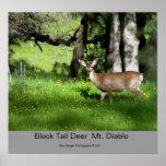 7 ciervos negros de la cola, ciervos negros Mt. Di Impresiones