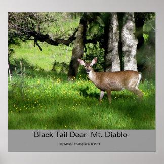 7 ciervos negros de la cola, ciervos negros Mt. Di Póster