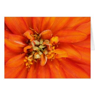 """""""7"""" floreciente foto anaranjada de la flor tarjeta de felicitación"""