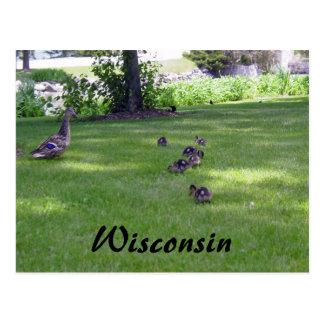 7 pequeños patos tarjeta postal