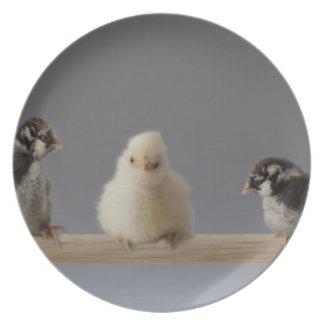 7 pollos del mascota del bebé en una perca plato