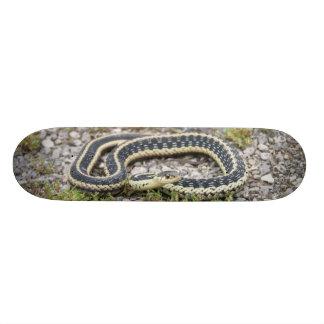 """7¾"""" Skateboard (Snake)"""