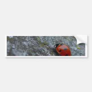 7-Spot Lady beetle Bumper Sticker