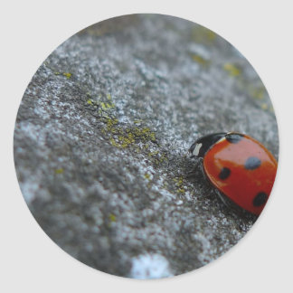 7-Spot Lady beetle Classic Round Sticker