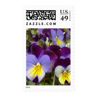 7a Blue, Yellow, Purple Violas Postage Stamp