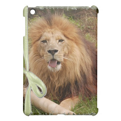 85 african-lion-st-patricks-0072