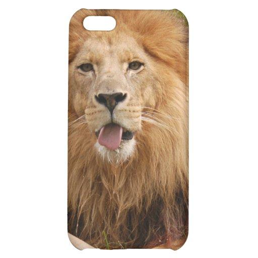 85 african-lion-st-patricks-0093
