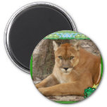 85-cougar-st-patricks-0022 refrigerator magnet