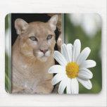 85-cougar-st-patricks-0039 mouse pad