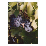 85. Sunlit Grapes, Sonoma County, CA Greeting Card