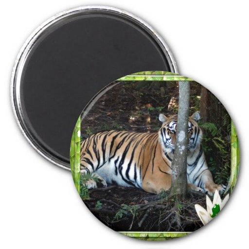 85 tigers-st-patricks-0025 imán de frigorifico