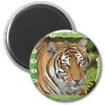 85 tigers-st-patricks-0064 iman para frigorífico