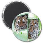 85 tigers-st-patricks-0071 imanes de nevera