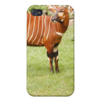 8.5x8.5-Template-i iPhone 4 Cases