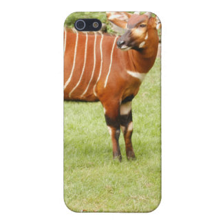 8.5x8.5-Template-iPhone Case Covers For iPhone 5