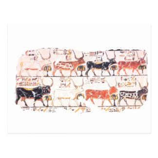 8 cows post card