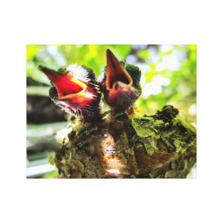 8 Day Old Rufous Hummingbirds Canvas