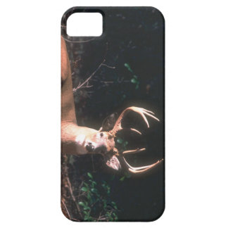 8 Point Buck Picture on iphone 5 case