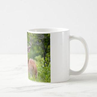 8 Point Whitetail Buck in Velvet Coffee Mug