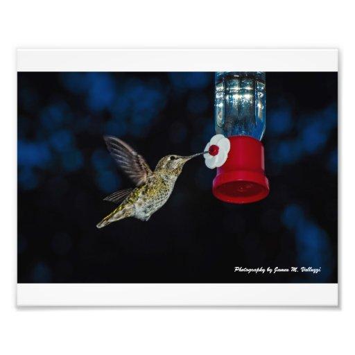 8 x 10 Calliope Hummingbird at feeder Photo Art