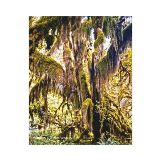 8 x 10 Hall of Mosses Trail  #1 Canvas Print
