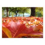 8x10 art prints Nature Photography Fall Leaves Photo Print