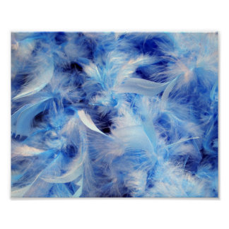 8x10 Fluffy Feathers Poster