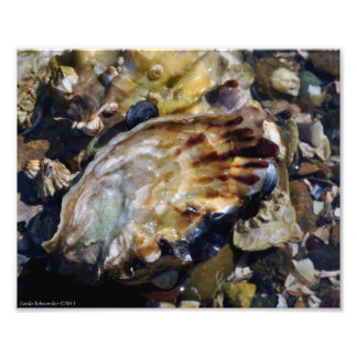 8X10 Oysters, Barnacles, Muscles and More Photo Print