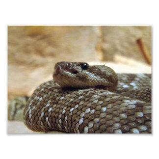 8x10 Rattlesnake Photo Print