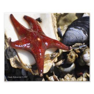 8X10 Starfish-Leather Starfish Photo Print