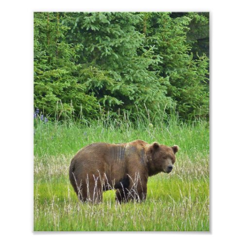 8x10 Value Poster Paper Matte w grizzly bear