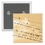 91(1) birds 2 inch square button