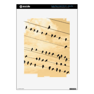 91(1) birds iPad 3 decal