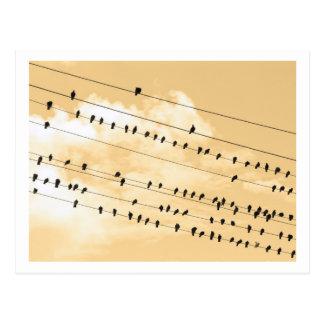 91(1) birds post card