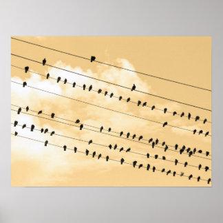 91(1) birds poster